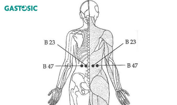 Huyệt B23 và B47